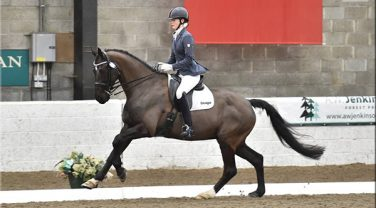 Horse trotting at Dressage competition