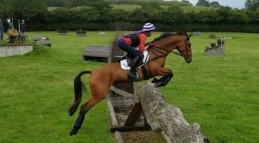 Horse jumping over Tree Trunk Hurdle
