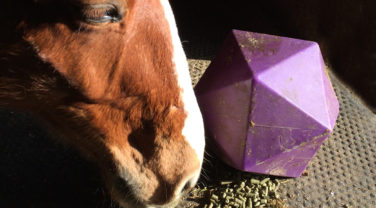 Stable Toy With Alfalfa Pellets