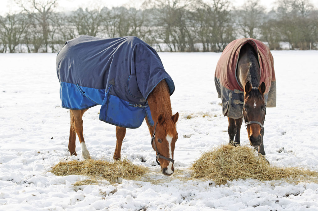 Horses Eating In Snow