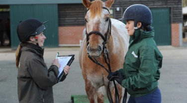 Equine nutritional consultation