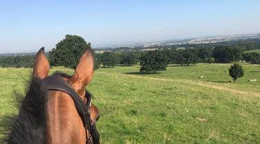 hill view from horseback